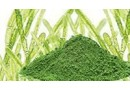 files-molecules-chlorella[66330f7251cd9bb0ac8576f28ede1f70].jpg